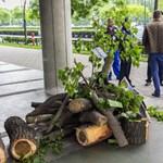 Szinte hihetetlen: nem kivágnak, hanem ültetnek fákat a fővárosban