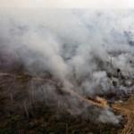Drámaian zsugorodik Amazónia erdősége
