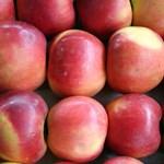 Szavazhatunk Magyarország kedvenc almájára