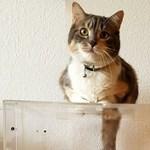 A gödöllői polgármesteri hivatal cicája is azt szeretné, ha mindenki elmenne szavazni