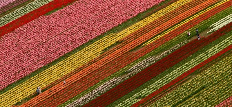 A nap képe: tulipánok közt Washingtonban