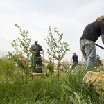 Romániába járnak dolgozni a magyarok a közmunka helyett