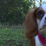 Drámai felvételen menti ki egy aligátor szájából a kutyáját egy floridai férfi