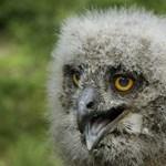 Hőség: Naponta zuhanyoztatják az állatokat a veszprémi állatkertben