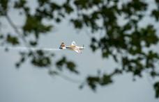 Megvan a Red Bull Air Race győztese Zamárdiban