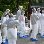 Fukusimai diákok nyaralnak Hódmezővásárhelyen