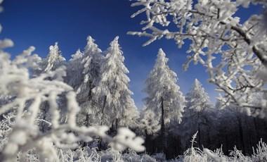 Adventi kalendárium – december 1.