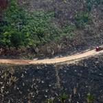 Nagyon belelendültek az esőerdők kivágásába Brazíliában