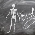Tudtok annyit biológiából, mint egy érettségiző? Teszt
