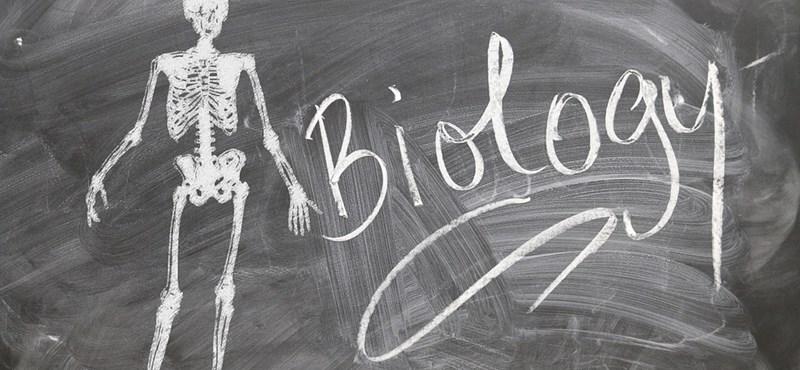 Íme, a középszintű biológiaérettségi megoldása: második rész