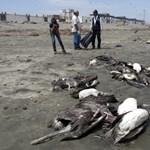 Fotó: rejtélyes állatpusztulás Peruban