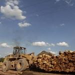 Brazília-Magyarország: növekvő nyerési esélyek