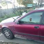 Kutyakaka landolt egy tilosban parkoló autón Budapesten - fotók