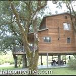 Ez itt a világ legnagyobb háza, ami egy fára épült (videó)