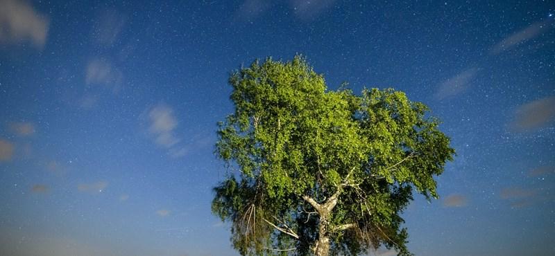 Zsebkendőket bekészíteni: A pollenhelyzet fokozódik