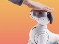 A járvány miatt bezárkózó japánok robotokat kapnak, hogy ne legyenek egyedül