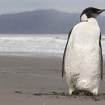 Állati jó szex – így maszturbálnak a természetben