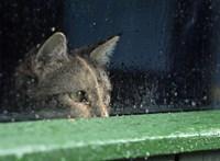 Végre egy kutatás a macskákról: jellemvonásaik fele öröklés által megy tovább