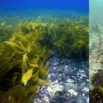 Sokkolja az állatokat az, ami a tengerekben történik – és ez az embereket is fogja