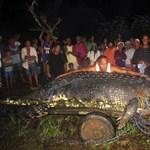 Fotó: egy tonna a világ legnagyobb krokodilja