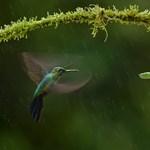 Az év legszebb természetfotói – Nagyítás-fotógaléria