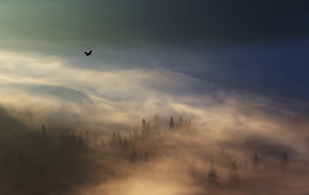 NE HASZNÁLD! - canon év természetfotósa, természetfotó, V. Állatok és környezetük, 1. díj - A holló birodalma