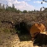 Most a volt Vidámpark területén kezdődött meg a fakivágás