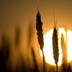 Új Ángyán-jelentés Bácskából: van, aki a semmiből lett földbirtokos