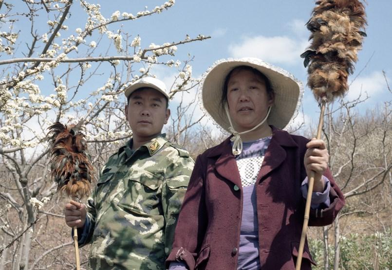 Donde las abejas han desaparecido para siempre: polinización manual en China