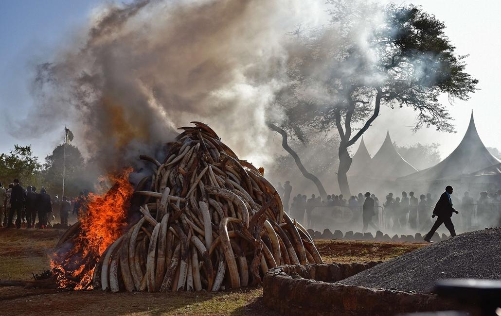 afp.15.03.03. - Nairobi, Kenya: lefoglalt elefántagyar a helyi nemzeti parkban. A hatóságok tizenöt tonna elefántcsontot foglaltak le - 7képei