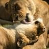 Fellélegeztek az állatok – itt az ideje, hogy újragondoljuk a nemzeti parkokat
