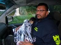 Négyéves eltűnt kislány életét mentették meg a zalai rendőrök