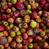 Tojásból készítettek bevonatot, ami frissen tartja a gyümölcsöket és a zöldségeket