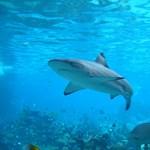 Turistákra támadt egy cápa a Vörös-tengeren