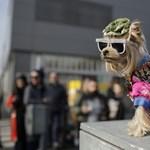Extrém kutyajelmezversenyt rendeztek