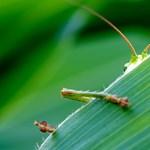 A rovarok negyede eltűnt 1990 óta, és ez ránk nézve is tragikus következményekkel jár