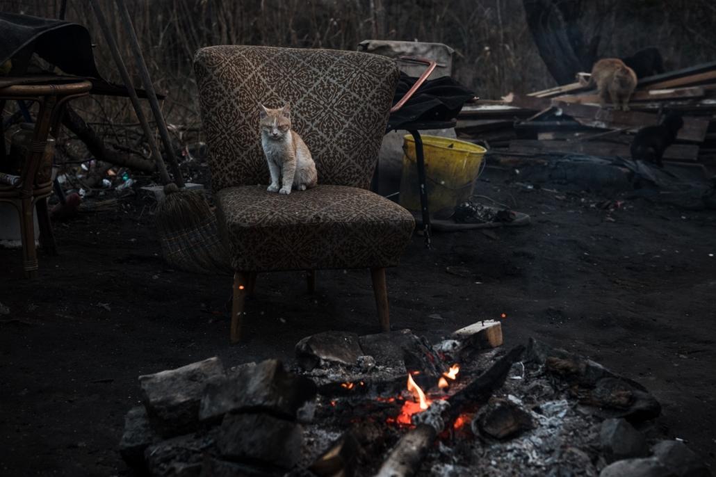 e_! - hvg év képei 2017 nagyítás - mm.17.03.08. - Tűz mellett melegedő macska egy budapesti hajléktalan tanyán március 8-án.