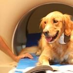 Meglepő megfigyelést tettek a kutyákról magyar tudósok (fotókkal)