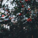 Adventi mesenaptár – december 20.