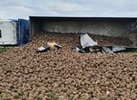 Szokatlan baleset Csehországban: Egy rakomány cukorrépa temetett be egy autót