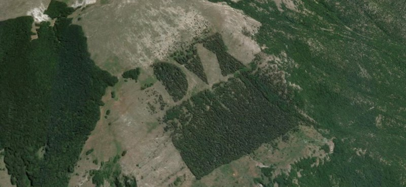 """Ezer fával pótolták ki a """"Mussolini-erdőt"""" olasz neofasiszták"""