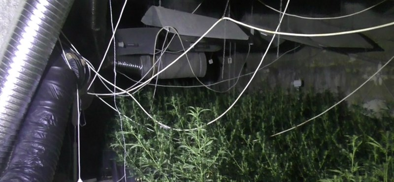Gyanús volt, hogy nincs áram a környéken, kannabiszültetvényt találtak a budafoki barlangban