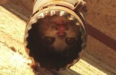 Fejjel lefelé ereszcsatornába szorult macskát mentettek a kiskőrösi tűzoltók