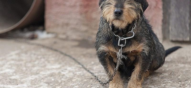 Bekúszott a politika a deteki állatkínzásos ügybe