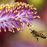 Megvan, mi mentheti meg a méheket – semmilyen felszerelés nem kell hozzá