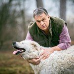 Kilenc magyar kutyafajtára figyel a kormány