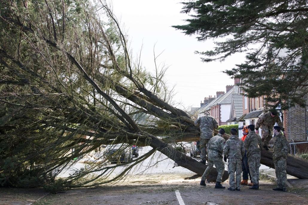 afp. szél, szeles, időjárás, nagyítás - Egham, Egyesült Királyság, kidőlt fa 2014.02.15.
