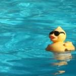 Cukibb, mint a vizes vb: így lakoltattak ki kiskacsákat a BVSC medencéjéből