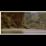 Gyönyörű tisztelgés Malajzia vadvilága előtt (videó)