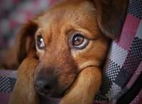 Ön is rászól a kutyájára? Lehet, hogy rosszat tesz vele